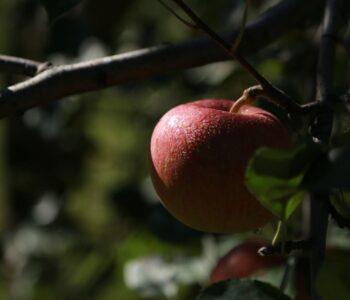 Står dit æbletræ virkelig inde ved naboen eller ligger dit hus indover skel?